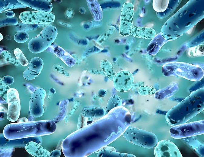 Probióticos y microbiota